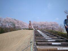 立ち寄った鞍ヶ池PAの桜にびっくりぽん…・格安、時短のお花見