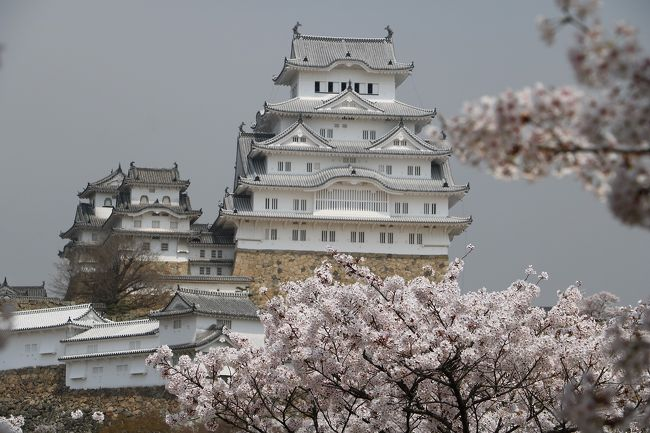 今年の冬は寒かったので、桜の開花が遅れるのではと心配していたのですが、暑い日が続きあっという間に満開になってしまいました。<br />姫路城の桜も3月30日に満開になり、ちょっと遅いかなと思ったのですが、人混みを避けて今日出かけてきました。<br />この時期、姫路城には毎年出かけていますが、日本のお城と桜は絵になります。<br />この日は天気予報は晴れだったのに、PM2.5か黄砂の影響で見通しが悪く、青空の下での花見にはなりませんでしたが、美味しいお酒をいただくことができました。<br />今回は、下手な解説はやめてきれいな姫路城の写真を紹介させていただきます。
