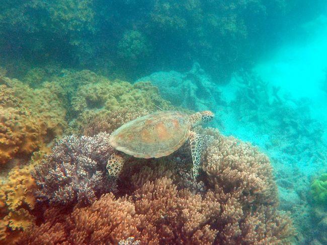 夏のケアンズへ<br /><br />シャングリラ宿泊です。<br />ミコマスケイ・ワイルドライフドーム・キュランダへ出かけています。