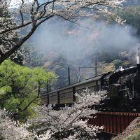 桜をもとめて 大井川鉄道へ