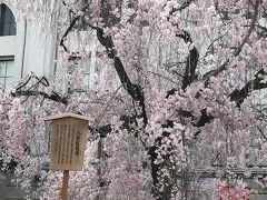 造幣局の桜は11日まで待てずに咲きだした。