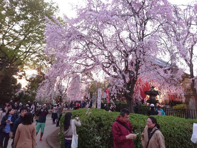 毎年恒例の上野でお花見<br />家族4人で揃ってプラプラ歩く。<br />毎年楽しみです。<br />