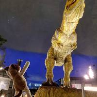 たびねこナツコと行く!女一人旅in石川&福井vol.3・・・3日目は福井でローカル線ぶらり旅&恐竜博物館、そして帰路まで♪