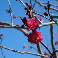 HKT48春のアリーナツアー【仙台】