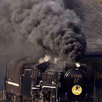 蒸気機関車D51-200号機デビューおめでとう!「SLやまぐち号」に乗って