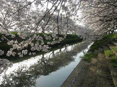 栗橋スポーツ公園から中川の合流点までの水路両側の桜並木を追って歩く