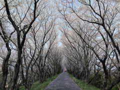 「池田・神戸」 西美濃の桜の名所の霞間ケ渓と輪中堤で花見をする旅