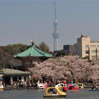 2018「さくら・桜」ー上野・小石川・乾通り・etcー
