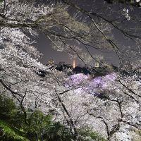千鳥ヶ淵の桜を武道館側から愛でる。いつもと、また違った味わい