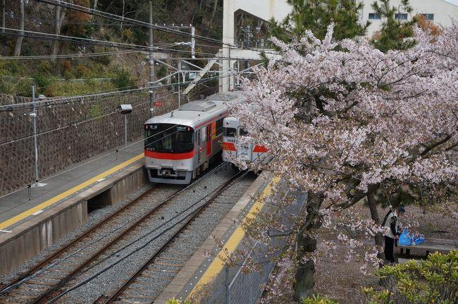 桜が舞い散る春の西神戸を一人で散策してきました。<br />神戸市民の地元住民目線での旅行記です。