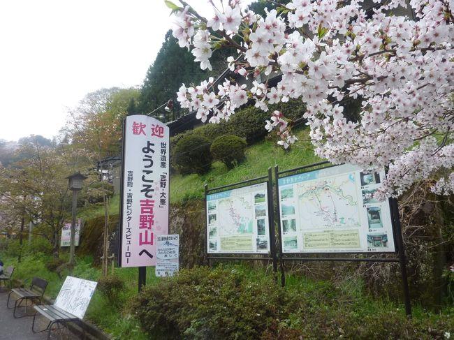 吉野の千本桜 2018 (奈良県吉野山)