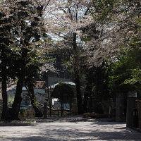 シルバーフェリーで行く青森桜めぐり(札幌から八戸市内へ)
