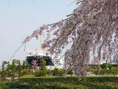 横浜、桜の花を愛でる1週間、ヨコハマ花だより!! みなとみらい、山下公園、野毛山公園、掃部山公園、大岡川沿いの桜など。
