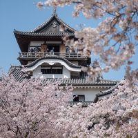 東海の桜 2018 【2】犬山城 さくらまつり