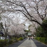 松陰神社&勝国寺の桜 2018/03/27