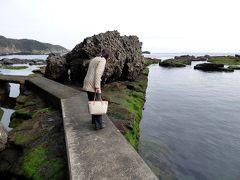 桜と水仙を見る節分のHJ下田1泊 恵比寿島 須崎の猫