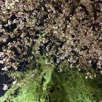 春の京都 2018 ⑤ 祇園白川と高瀬川の夜桜