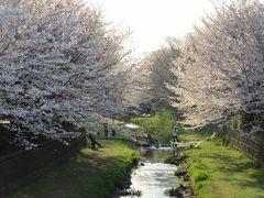 2018年3月25日:桜満開の野川西之橋散策