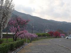 桜咲く奥大井で車中泊 その3 日本一短いトンネルと塩郷の恋金吊り橋
