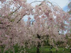 京都の春を求めて1泊2日18きっぷの旅