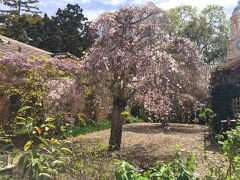 桜のフィローリと丸亀うどん! ろる