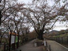 今年ははやかった桜、勝沼、北杜など