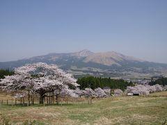 2018年。満開の観音桜と南阿蘇鉄道 恒例の熊本・天草の旅【その1】