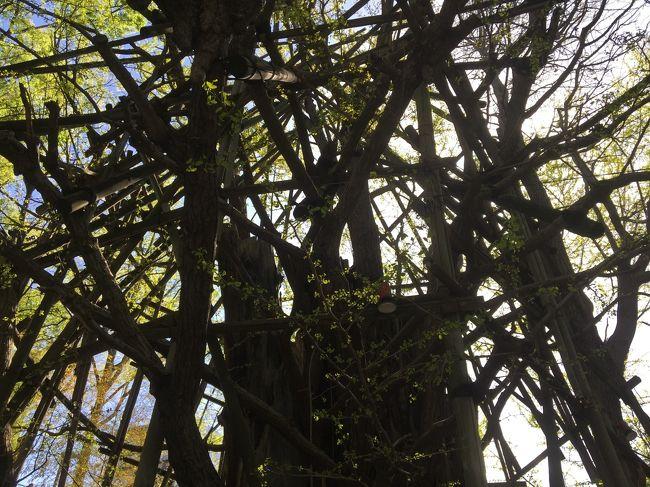 川崎にある稲毛神社の骨董市へ行ってきました。<br />4、5店出店の小さな骨董市でした。<br />神社にある推定1000年と言われる大木の大銀杏の樹を眺めました。<br />昭和20年、戦禍により焼けてしまったそうですが、生命力強く、その後も生き続けています。<br />生命力を力強く感じました。<br />その後、久しぶりに戸越銀座商店街へ。<br />レトロなお店をのぞきながら、から揚げ屋さんでひと休みしました。<br />昔ながらのお店も多くて、面白かったです。