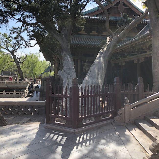 中国の省、直轄市を全て訪問する旅、13都市目。(投稿は2回目)<br />山西省の省都、太原市を散策しました。<br />歴史のある都市(晋の国)という事もあり、街全体に「歴史推し」<br />の雰囲気を感じました。