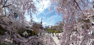 桜花爛漫 東京タワー お台場自由の女神 スカイツリー