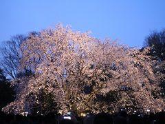 2018しだれ桜が満開の六義園