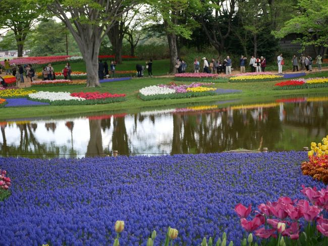 """東京立川・昭和記念公園の""""フラワーフェスティバル2018""""を訪れて"""