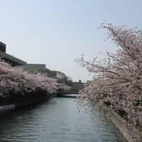 2018 春の京都①