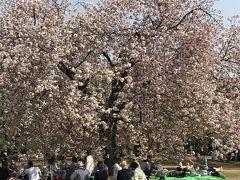 花を求めて② 新宿御苑でお花見