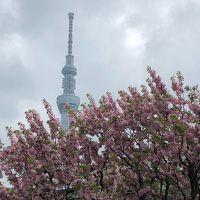 モクシー錦糸町拠点に江東・墨田を徘徊