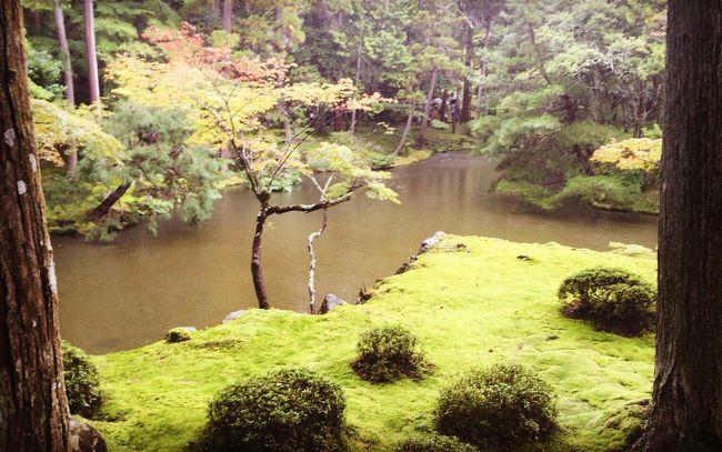 紅葉がまだ色づく前の10月上旬。<br />いつか絶対に行きたい、と思ってた<br />苔寺(西芳寺)に行って来ました。<br />それがメインだったので、<br />あとはゆっくり嵐山を楽しみました。<br />