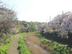 2018年4月8日:野川中前橋から武蔵野公園西側の野川沿いの紅枝垂れ桜散策 & ちゃんぽん「じげもんとん」