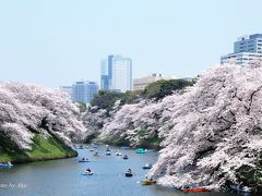やっぱり凄かった!千鳥ヶ淵 満開の桜