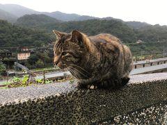 のんびり台北旅 1~2日目☆ お寺と猫と列車の巻