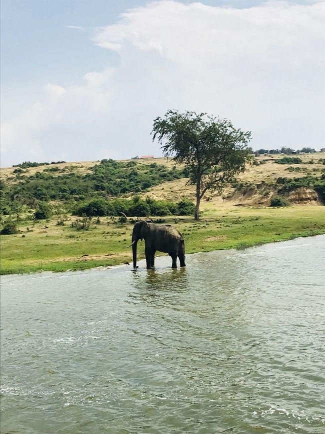 12月中旬に10日間の日程で東アフリカに野生動物を見る一人旅に出かけました。<br />ルワンダとウガンダ両方のゴリラトレッキングに参加したかったので、<br />既存のツアーではなく、ウガンダで日本人が経営されている旅行会社 グリーンリーフツーリストさんに旅のアレンジをお願いしました。<br /><br />2017/12/15 成田発 ドバイ経由 <br />12/16 ルワンダ キガリ着<br />12/17 ヴォルカン国立公園ゴリラトレッキング<br />12/18 ウガンダへ陸路で移動<br />12/19 ブウィンディ国立公園ゴリラトレッキング<br />           コミュニティウォーク<br />12/20  クイーンエリザベス国立公園<br />           リバークルーズ