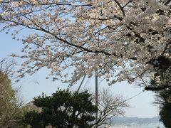 春の鎌倉・江の島一人旅②