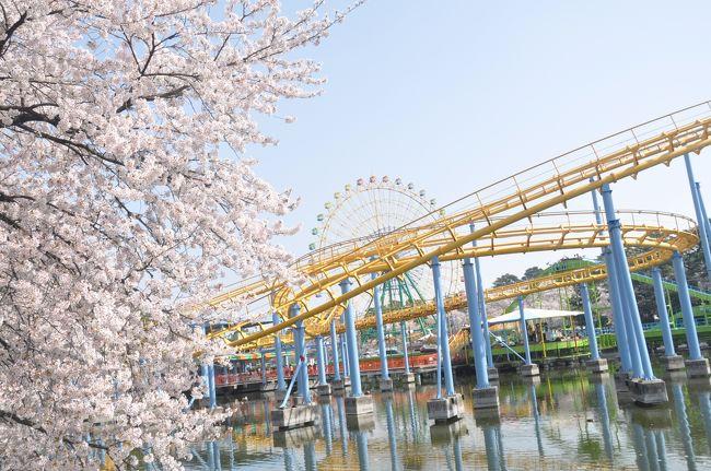 伊勢崎市にある華蔵寺公園で4月1日から「華蔵寺公園花まつり」がスタート<br /><br />折しも桜が満開なので行って来ました。<br /><br />この時期かなりの混雑が予想されるのでチャリにして正解。<br /><br />一人なので写真を撮りながら一回りして帰ってきました。