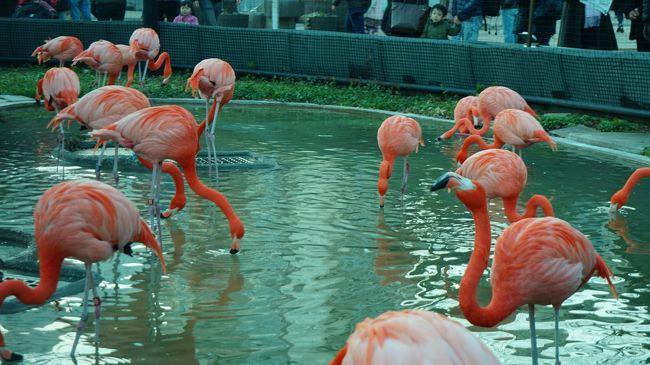 上野動物園を散歩。