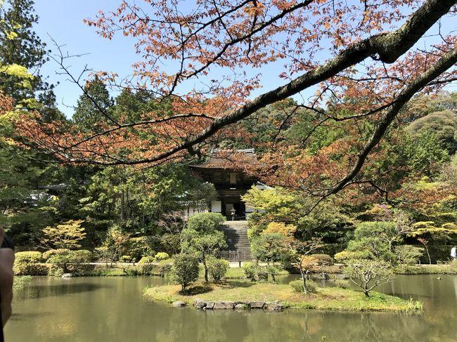 JR東海 奈良観光CMーうましうるわし奈良 2018年<br />キャッチコピーは「心の角をおとしませんか」<br /><br />大阪行き前日・・・テレビから、あのメロディー♪~♪~♪と共に、<br />「心の角をおとしませんか」<br /><br />孫の保育園お迎え迄に、ちょこっと奈良・円成寺へ<br />JR奈良駅から路線バスに乗る事37分(ダイヤ通りの所用時間でした)<br />帰りのバスの時間迄ゆっくり拝観しても、時間がたっぷり余ります。<br /><br />ふっと 目にしたのが、「写経随時受け付けます。」の文字<br /><br />鳥の声を聞きながらの写経。<br />心を無にして筆を持つ・・・心がホットひと休み・・・<br />心が丸~くなったかしら?<br /><br />せっかく大阪に帰って来たんやから、美味しいもん食べたいなぁ~で、<br />生駒のお山の中腹に有る美味しいピザ屋さんへ<br /><br />新緑が目にも心にも優しいこの季節、美味しいもんも頂いて。<br /><br />心 丸~くなったかしら?<br />はるさんが・・・ 「体 さらに丸~くなったでぇぇ~~」o(&gt;_&lt;)o