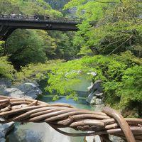 ダイヤモンドプリンセスで西日本巡り その4 3日目 かずら橋と祖谷渓