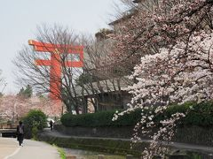 京都ひとり旅1 桜は早朝散歩に限ります 白川通り、岡崎疎水、平安神宮