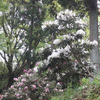 蓮華寺池公園で花見