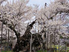 神代桜とソメイヨシノと桃畑の北杜市へ