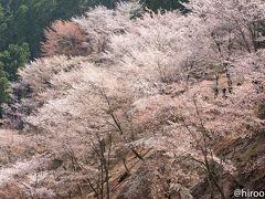 吉野山 2018 : 奥千本は凄かった