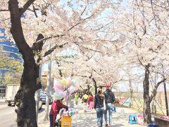 春のソウルでグルメ&街歩き at 江南 2018(6)「永登浦 汝矣島 春の花祭り②」